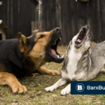 BarxBuddy Review: The Best Anti-Barking Training Device [2020 Gadgets]